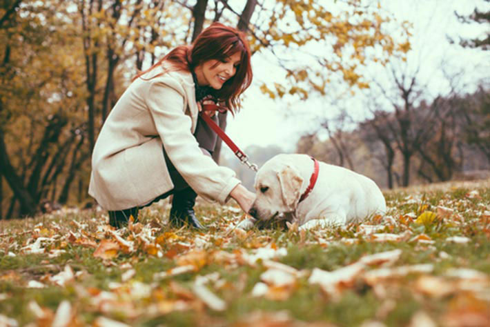 Why Dogs Are Great For Your Health